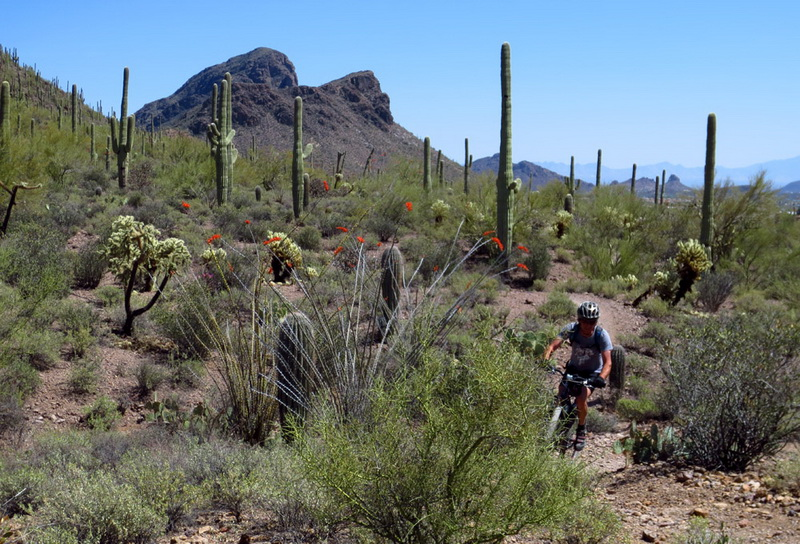 Mountain biking the Arizona Trail. Photo by Scott Morris.